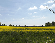 Rapefield in Essex